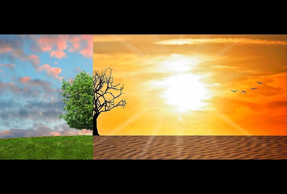 בקרת אקלים בגינות הידרופוניות