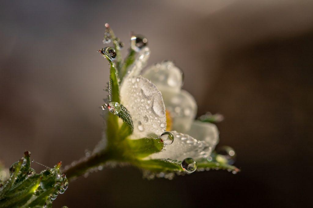השקיה בגינות הידרופוניות